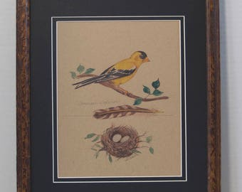 Goldfinch with nest and feather