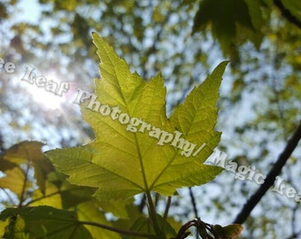 Behind The Leaf Photograph