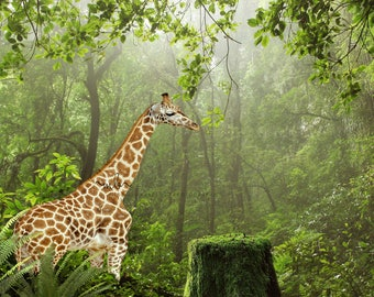 Giraffe in forest with tree stump digital background, backdrop for photographers, photography