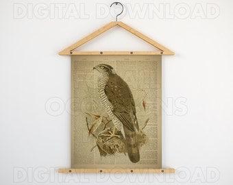 Printable wall decor, Gift print, Wall art, Bird decor, Print vintage, Sparrow-hawk art, Animal dictionary print, Digital download art, JPG