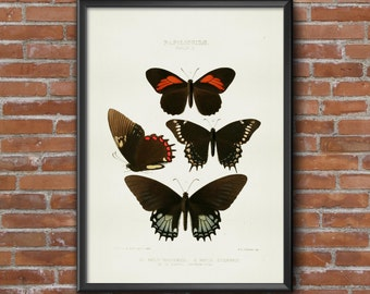 4 old vintage Illustrations of insects-butterflies