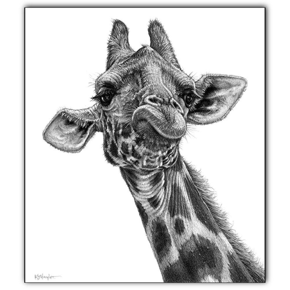 New Giraffe signed art print Wildlife wall art animal pictureCool Giraffe Drawings