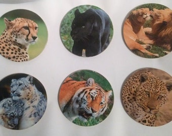 Large Cats Coasters