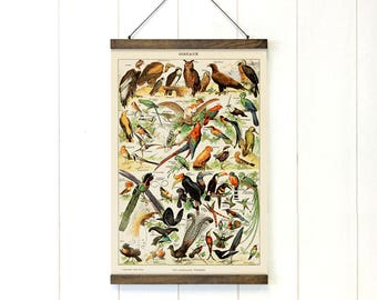 Pull Down Chart, Birds Educational Chart Diagram, Adolphe Millot Birds, Birds, Vintage Style, Natural History, 20x29