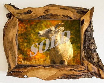 Picture Frame 8x10 Diamond Willow Wood Unique Photo Frame