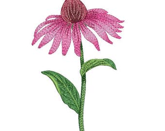 Embroidery design, дизайн вышивки, Echinacea, эхинацея, flower, цветок, plant, растение, Chamomile, ромашка, Embroidery on clothes, одежда