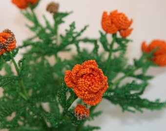 The Siberian globeflower