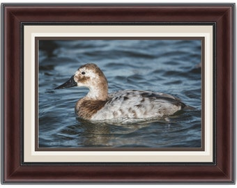 Speckled Duck Print