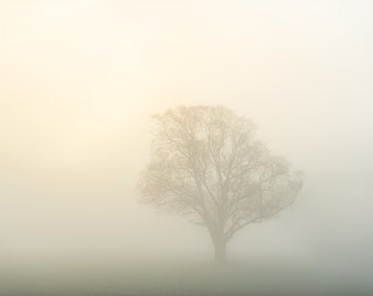 Sun peeking through fog, fog, foggy, sunrise, tree photograph, photo, print, framed
