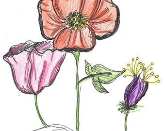 Hand drawn flower poppies