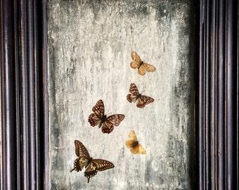 Original art butterflies framed by rebecca heyes