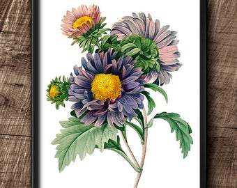 Aster Chinensis · 8x10 · Instant Download · Flower · Vintage · Wall · Printable · Digital File #54