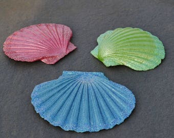Decoration - real scallop
