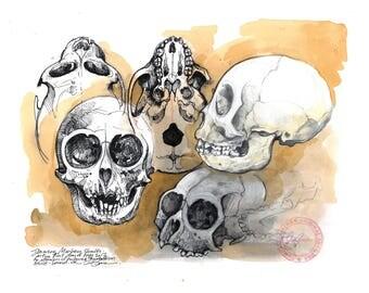 Monkey Skull Drawings - Original Artwork