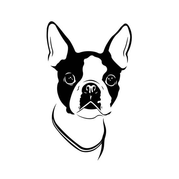 Boston Terrier Dog Graphics Svg Dxf Eps Png Cdr Ai Pdf Vector