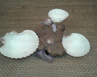 Sea Shell Hermit Crab Food/Water/Bath Dish w/ Amethyst HCFWB3