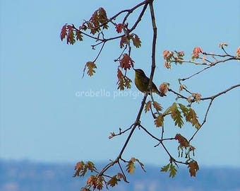 Bird in a Tree 8x10 Glossy photo by Hunter Cooksey