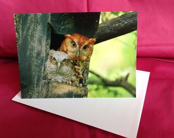"Owl art, Owl photography, Owl print, Owl photo note card. "" Red and Moe"""