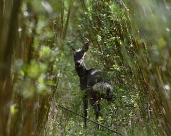 deer in willows