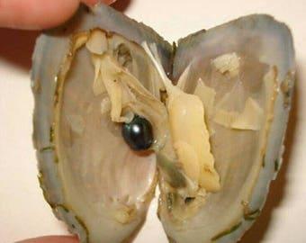 salt water oyster