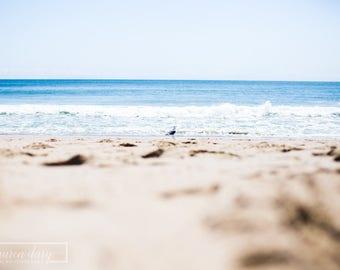 Sea Bird - fine art photography print