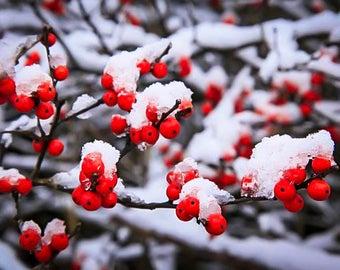 Snowberry Mason Jar Soy Candle