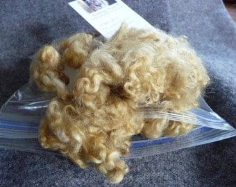 Lincoln Longwool Sheep Wool Fleece Natural Dyed Locks fiber Plant Tansy felting 1 oz.