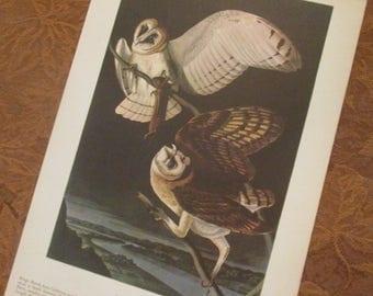 Vintage Bird Illustration - Audubon Book Plate - Barn Owl Illustration for Framing