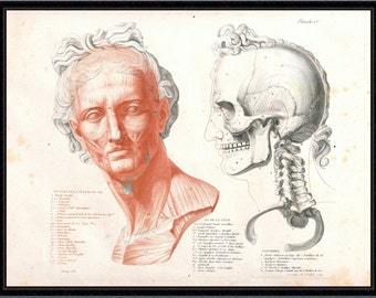 Anatomical Study of a Gladiator (No.1) antique reproduction print giclee print anatomy print anatomy art vintage anatomy antique anatomy
