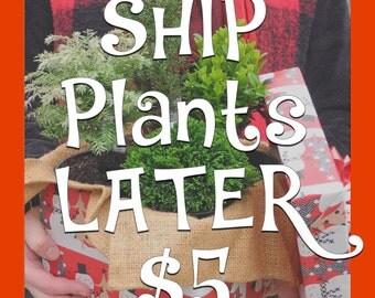 Ship the Plants Later, Green Gifts for the Miniature Garden, Fairy Garden, Pre-Bonsai, Railroad Garden, Succulents, Will Send Plants Later