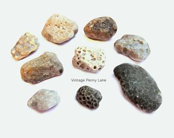 Petoskey Stone Fossil Beach Rocks, Stones, Lake Ontario