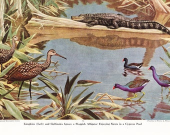 1940s Alligator and Birds Animal Print -  Vintage Antique Home Decor Book Plate Art Illustration for Framing