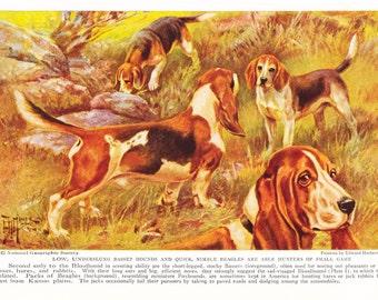 1930s Basset Hound Beagle Dog Print -  Vintage Antique Animal Pet House Home Decor Book Plate Art Illustration for Framing