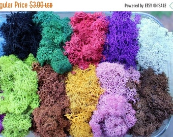 20% off Reindeer moss-Terrarium accessories-1 oz bag in 16 colors-Deer foot Moss-Black-Mango-Red-Gray-Purple-Blue- 1 Oz. Bag Preserved Liche