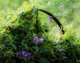 Wild Flowers - Morning Glory - Old Wheel with Flowers - Flowers - Purple Flower - Morning - Fine Art Photography