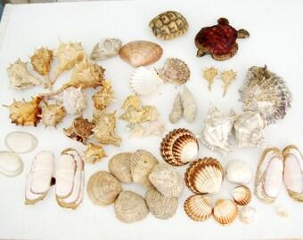 Sea shells bulk, natural sea shells ,Genuine Seashells mixed sea shell decor Aquarium Decor Raw Seashells