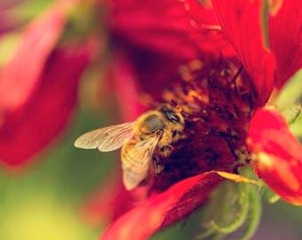 Summertime Bee Photograph