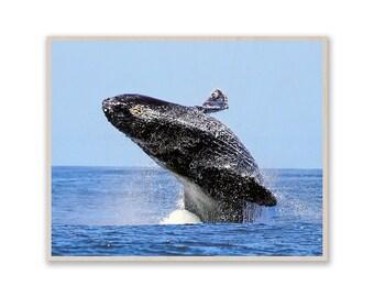 Whale- Art on Wood, Custom Photo on Wood, Custom Art on Wood, Image on Plywood, Custom Photo Prints, Gift Idea w026