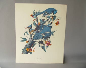 Audubon Bird Print, color, Your Choice of One, Cardinal, woodpecker, pigeon, finch, blue jay