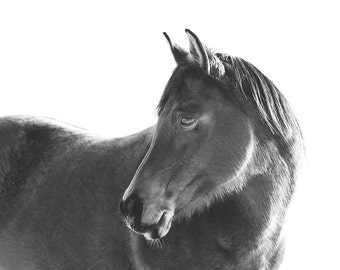 Black Horse with White Background Photograph | Modern Horse Art