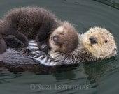 BABY SEA OTTER and Mom Photo Print, Animal Nursery Decor, Mom and Baby Animal Photography, Wildlife Photography, Nursery Art, Sea Otter Pup
