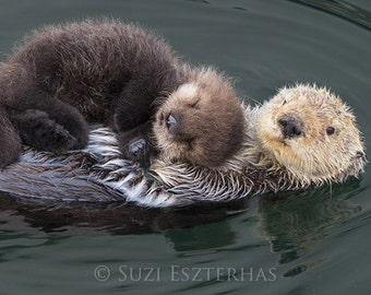 BABY SEA OTTER and Mom Photo Print, Animal Nursery Decor, Mom and Baby Animal Photography, Wildlife Photography, Nursery Art, Sea Otter Pup