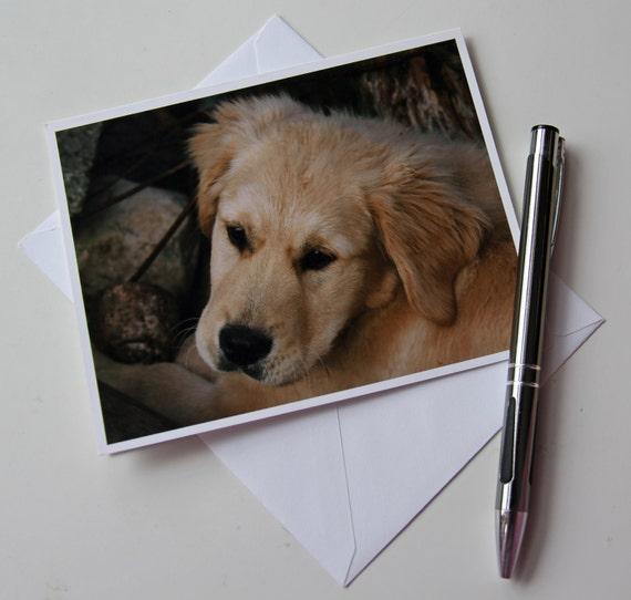 Golden Retriever note card, Dog photo card, Retriever photo card, Dog note card, puppy note card, Golden retirever photo card, puppy card
