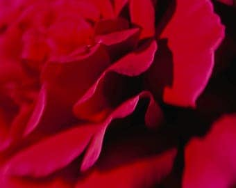 Flower photo - Scarlet - Nature Photo - Torch Red abstract - Fine art photography - Botanical Bokeh - feminine, passionate, romantic, dreamy