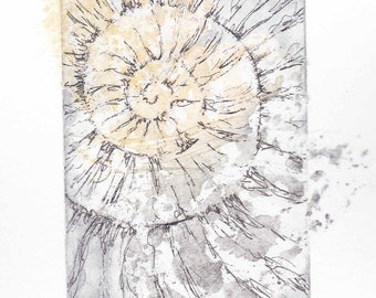 Original ammonite fossil zinc etching no.60 with chine colle jurassic Dorset coast fossil spiral fossil ammonites golden section