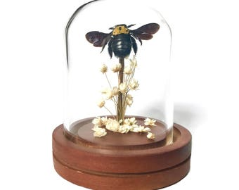 Real Bee preserved in Tiny Glass Dome Display Cloche