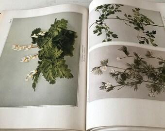 Vintage Book Of Wildflowers Flowers Vintage Garden Book Plants Prints