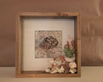 Shadow Box Seashell Frame with Airplant