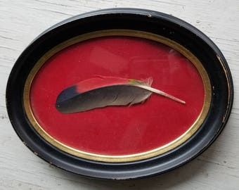 Vintage oval framed colorful bird feather