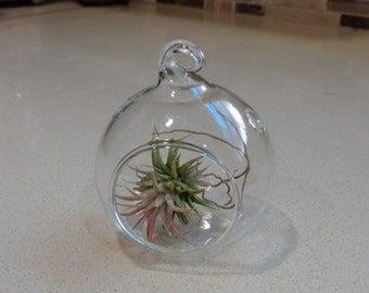 "Mini 2"" Glass  Plant Orb/Terrarium"